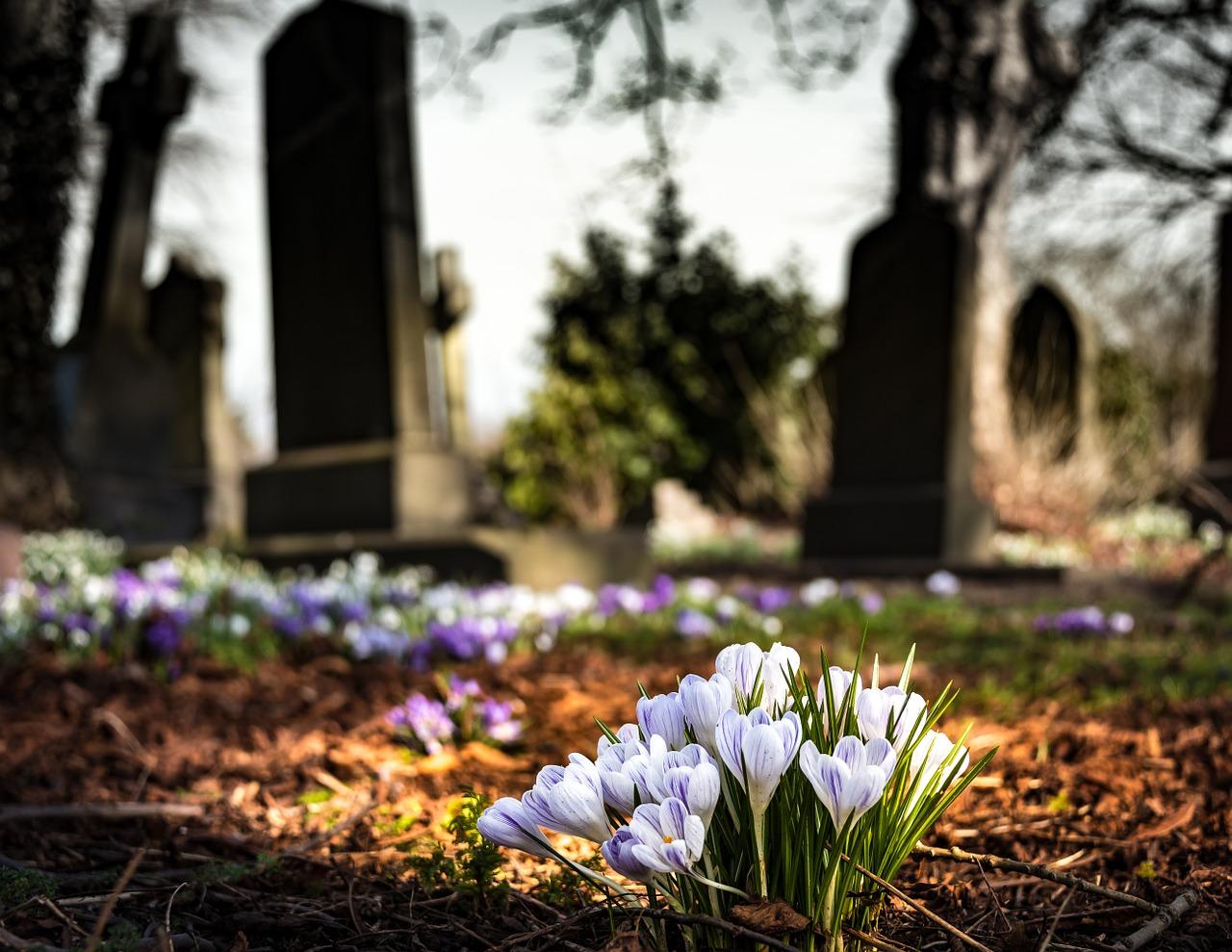 Fleurs dans un cimetière